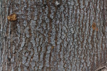 Wood texture Banco de Imagens