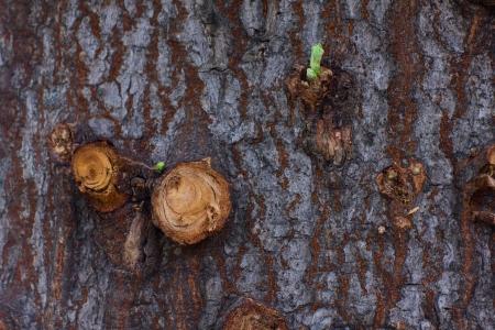 Wood texture and stump Banco de Imagens
