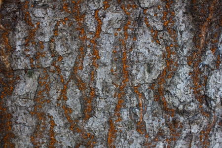 red and gray Bark texture Banco de Imagens - 24283249
