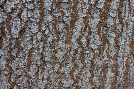 wood texture Banco de Imagens - 24283256
