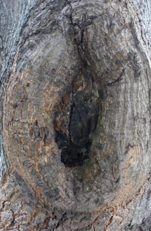 eigenaardig: eigenaardige boom