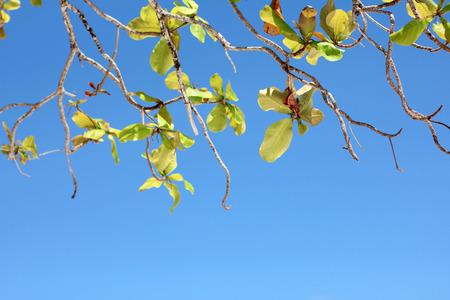 tree branch in the blue sky