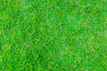 greengrass: Green grass