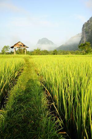paddy fields: Rice Fields, Laos Stock Photo
