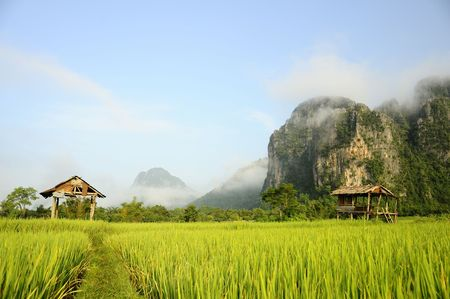 Rice Fields, Laos Stock Photo