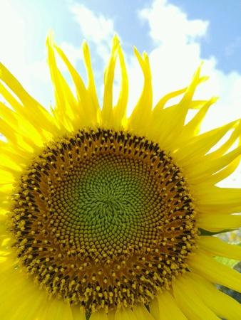 up: Close up of flower seeds