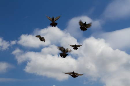 Pigeons were flying to Thailand photo