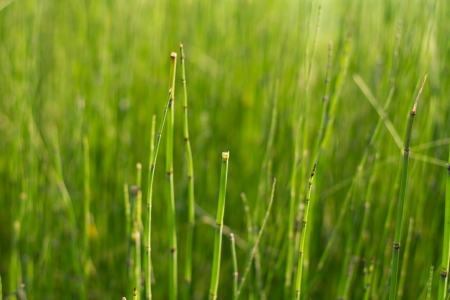 Jointed grass in the park Stock Photo