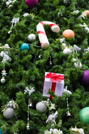 Gift box with Christmas trees  Stock Photo - 16488858