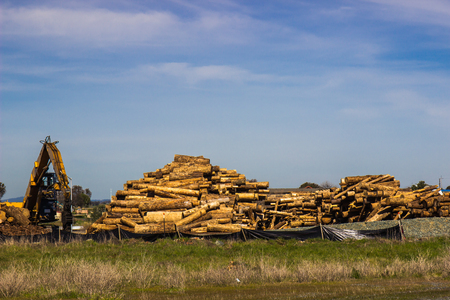 Bulldozer Stacking Logs For Trip To Mill Stock Photo