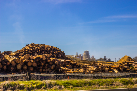 Pile Of Logs Waiting To Go To Mill Stock Photo