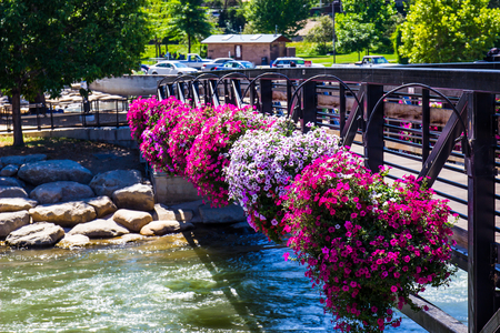 Annual Flowers On Foot Bridge Over The Truckee River