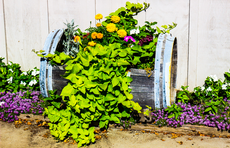 Outdoor Flowers In Cut Out Barrel