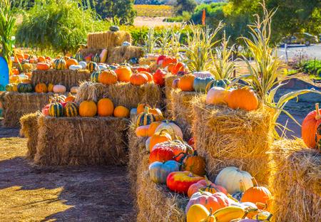 Pumpkins & Squash On Display On Hay Bales