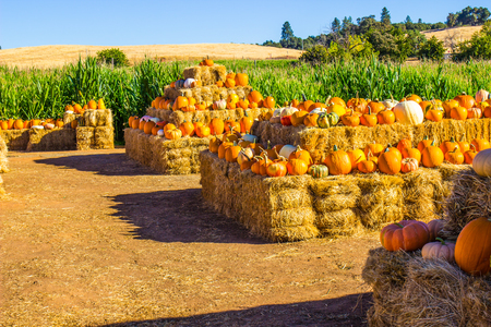 Halloween Pumpkins & Squash On Display Stock Photo