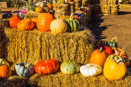 Colorful Halloween Pumpkins & Squash