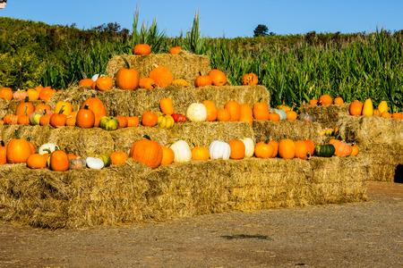 Display Of Halloween Squash & Pumpkins On Hay Bales