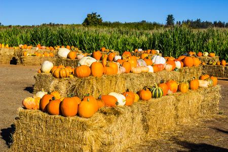 Halloween Pumpkins & Squash On Hay Bales Stock Photo