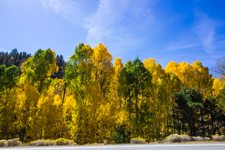 Changing Colors Of Trees In Fall
