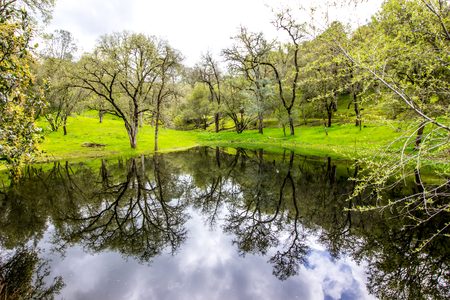 Reflection On Pond From Countryside Trees