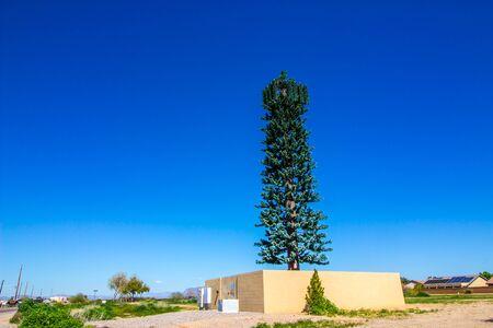Neighborhood Cellular Phone Tower Disguised As Tree