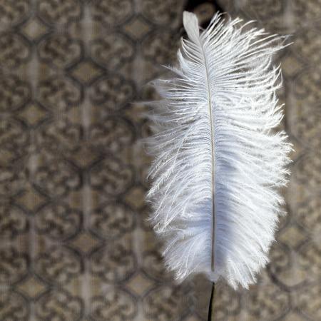 white feather: Hermosa pluma de color blanco sobre fondo de textura. El primer tiró. la isla de Phuket, Tailandia Foto de archivo
