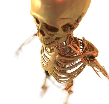 Golden Skeleton Banco de Imagens - 17796169