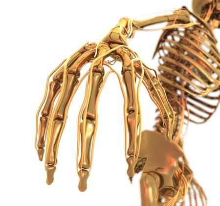 pelvis: Golden Skeleton