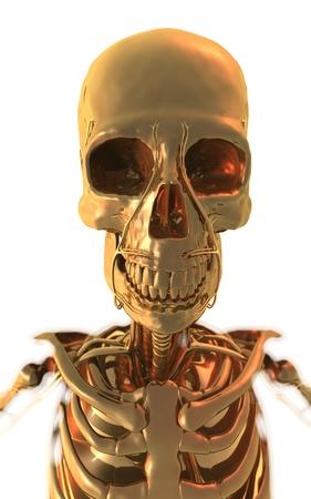 Golden Skeleton Banco de Imagens - 17796167