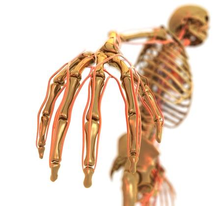 Golden Skeleton