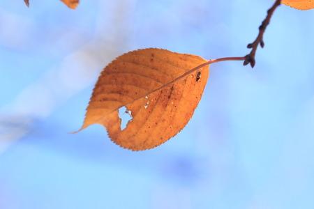 wormhole: Wormhole on a leaf Stock Photo