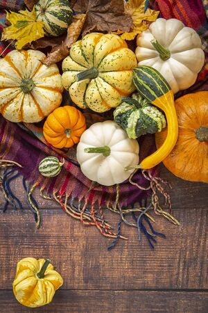 Autumn harvest. Decorative pumpkins of different varieties on a plaid blanket . top view.wooden background.Maple leaf