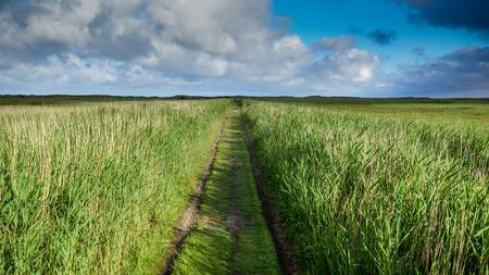 Path in Wheatfield
