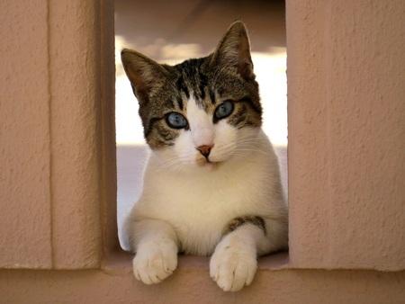 nosey: My next door neighbour!