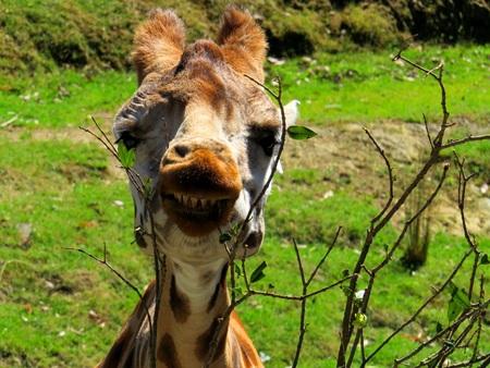 say cheese: Say Cheese!