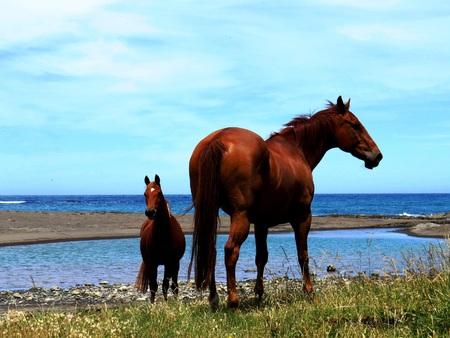 horseplay: Sea Horses Stock Photo