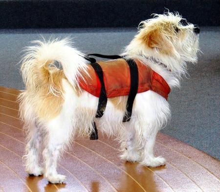 lifejacket: Seadog Stock Photo