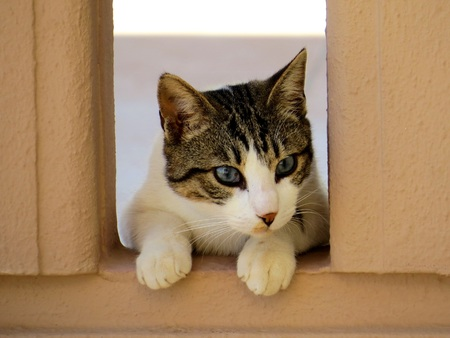 grey eyed: Curious Kitten