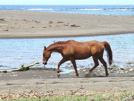 caballo de mar: Sea Horse