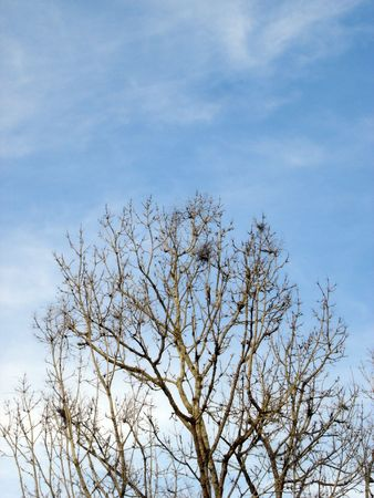 no cloud: branches in open sky