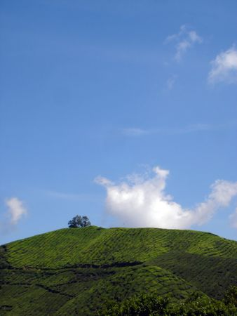 hillside: view of hillside with clear sky