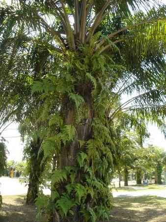 shady: palm tree Stock Photo
