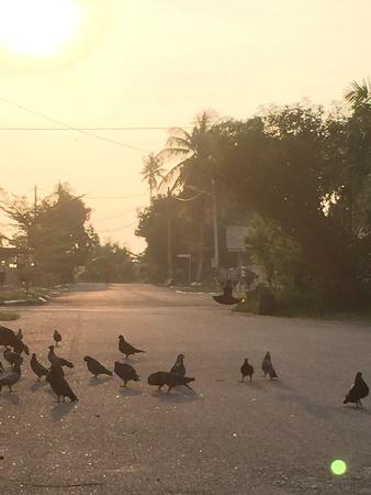 neighbourhood: Neighbourhood pigeons in the morning sun.