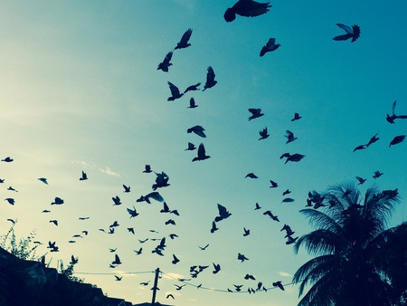 palomas volando: Las palomas que vuelan en el cielo de la ma�ana.
