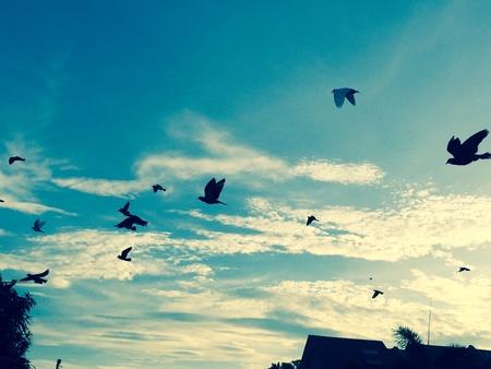 palomas volando: Las palomas que vuelan en el cielo de la mañana.