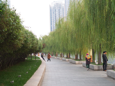 Salix Babylonica Leaf and tree From Riverside Garden in Tianjin City,Travel in Tianjin, China, October 19th, Year 2017 Editorial