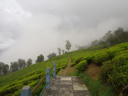 The Most Famous TEA Plantation in Darjeeling City, India Stock Photo