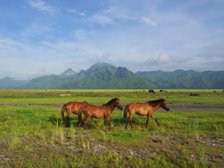 Caballos en el campo camino al Volcán Pinatubo. Viaje a Clark, Filipinas en 2013, 21 de julio