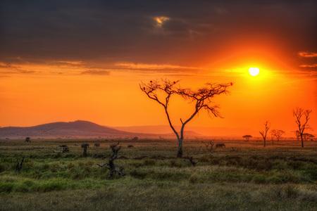 Fauna del Parque Nacional del Serengeti