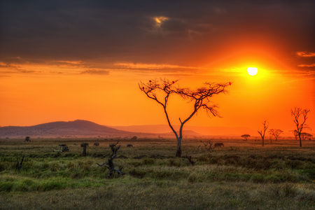 Serengeti National Park Wildlife